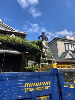 番外編😁お庭の剪定作業
